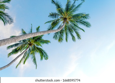 Tropical palm trees against a blue-purple sunset sky. Sunset in the tropics.