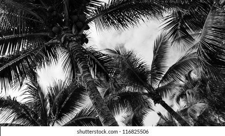 Tropical palm trees, low angle view