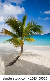 Tropical palm trees on secluded empty Salomon Beach in the Virgin Islands National Park on the Caribbean Island of St John in the US Virgin Islands