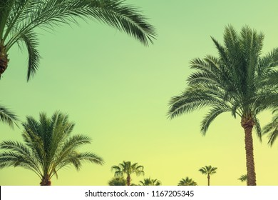 Tropical palm trees pattern and sky as copy space. Retro toned trendy holiday card. Exotic summer time background.