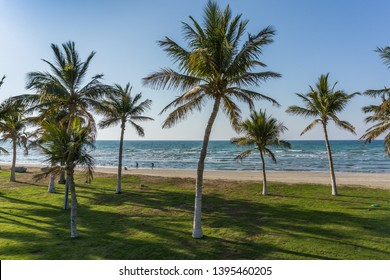Tropical palm trees in the Qurum Beach, Muscat.  Green grass, sea weaves and blue sky.