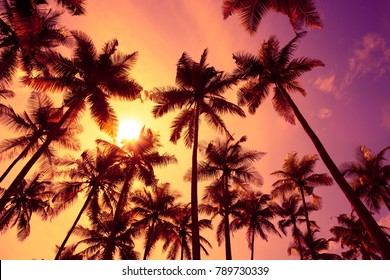 Tropical palm trees silhouettes at sunset light with shining sun.
