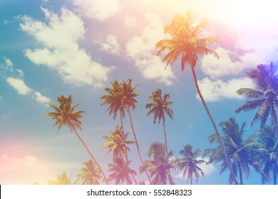Tropical palm trees at sunny summer day vintage color toned and film light leaks retro stylized