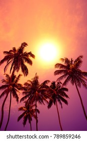Tropical palm trees at vivid sunset