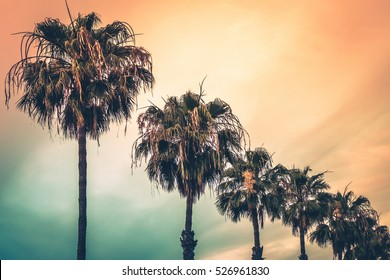 Tropical palmtrees with the colorful sky in the background