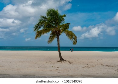 tropical panorama of Aruba beach on the Caribbean sea with white sand and palm trees in the Netherlands Antilles