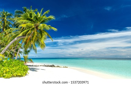 tropical paradise beach with white sand and coconut palm trees