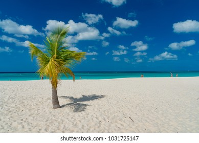 tropical paradise of the Caribbean island of Aruba with white beaches and palm trees