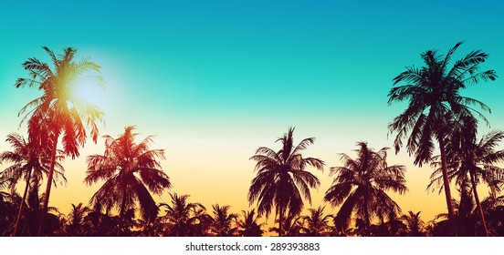 Tropical paradise design banner background. Coconut palm tree silhouettes at sunset. Panoramic view. Vintage effect.