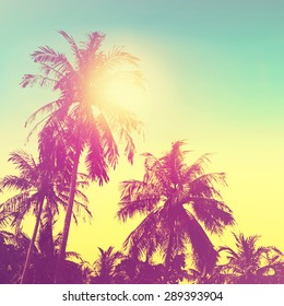 Tropical paradise design banner background. Coconut palm tree silhouettes at sunset. Vintage effect.