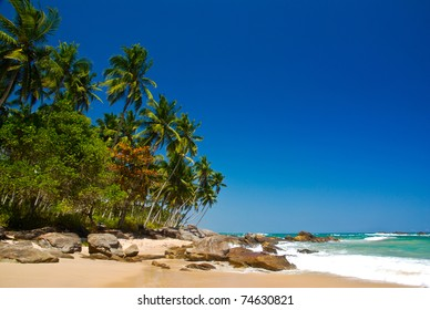 Tropical paradise in Sri Lanka with palms hanging over the beach and turquoise sea
