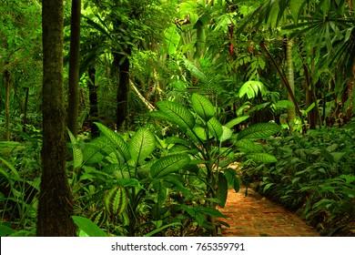 Tropical Park, Queensland, Australia