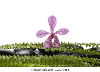 Tropical pink orchid and stones with green fern
