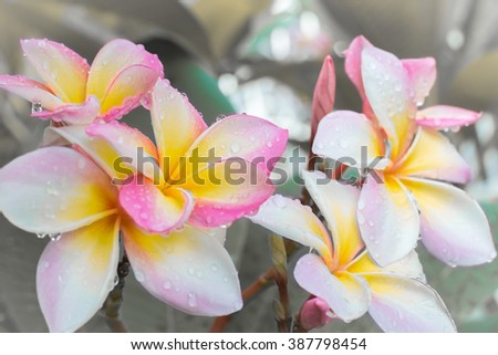 Tropical pink white yellow flowers growing stock photo edit now tropical pink white and yellow flowers growing on tree mightylinksfo