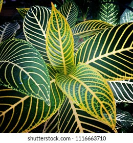tropical plan leaf / daun