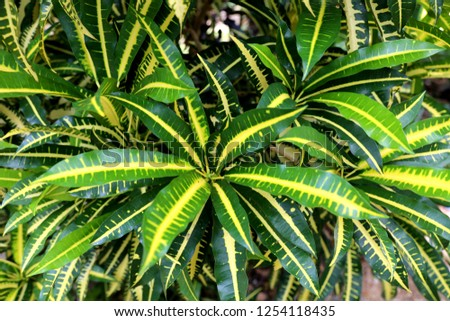 Tropical Plant Close Green Background Beautiful Stock Photo Edit