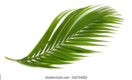 tropical plant fernleaf hedge bamboo branch