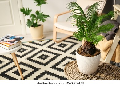 Tropical plant with green leaves in stylish room interior