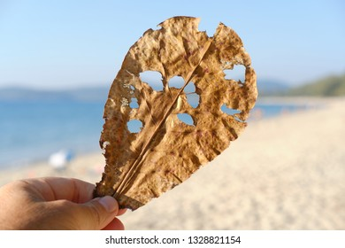 Tropical plant leaf with holes through holes can see beach and seaside