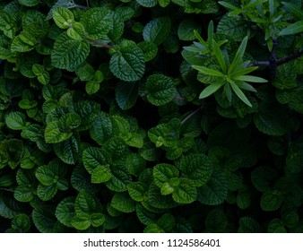 tropical plant leaves background