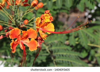 tropical plant, nature of caribean island