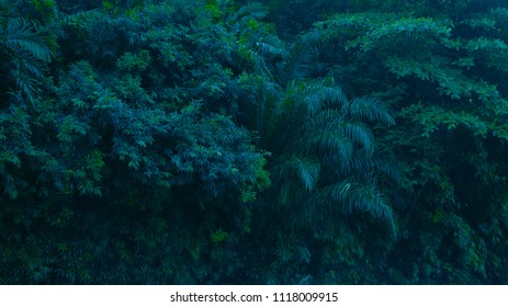 tropical plant rain forest background