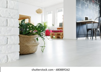 Tropical plant in woven basket on floor in bright apartment
