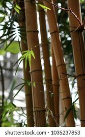 tropical plants in the botanical garden, selective focus, bokeh