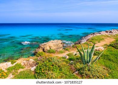 Tropical plants on sea coast of Majorca island near Cala Ratjada, Spain