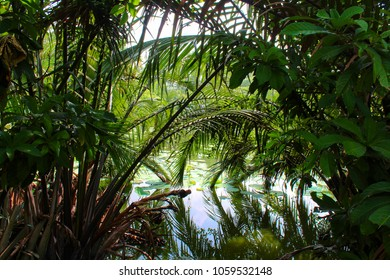 Tropical Plants on the Water in Bangkok, Thailand