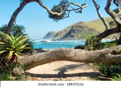 Tropical plants and trees on beach. Shot in Coffee Bay, Eastern Cape, South Africa.