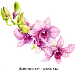tropical plants,orchid, flora watercolor illustration, botanical painting, hand drawing.