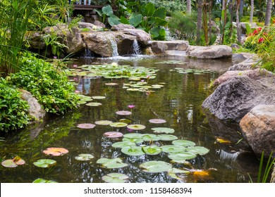 Tropical Pond park with water lily flower.