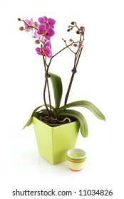 tropical purple orchid in green pot