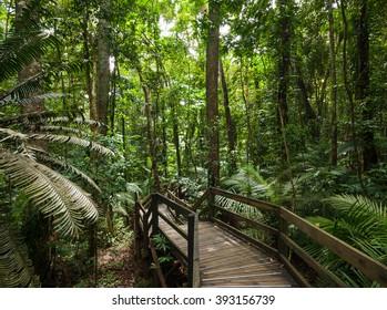 tropical rain forest in Cape Tribulation Australia, Daintree rainforest, an ancient jungle
