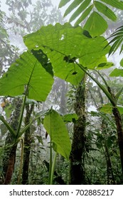 Tropical Rain forest in Ecuador (Otonga reserve)