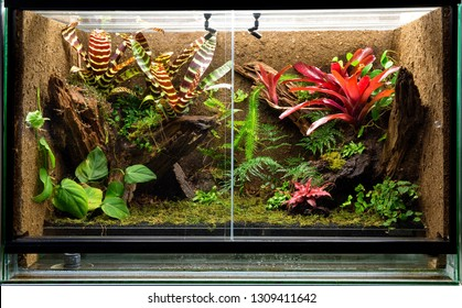 tropical rain forest terrarium. Pet tank vivarium for exotic frogs, lizards or gecko