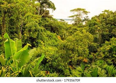 Tropical Rainforest Aerial Landscape Of National Park Yasuni, South America