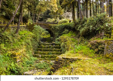Tropical Rainforest In Alishan National Scenic Area, Taiwan. The Alishan National Scenic Area Is Mountain Resort And Nature Reserve. Image For Templates, Placards, Banners. Etc