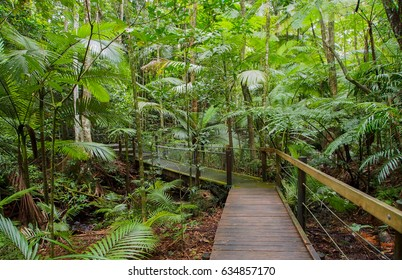 Tropical rainforest board walk in Cairns, Queensland, Australia