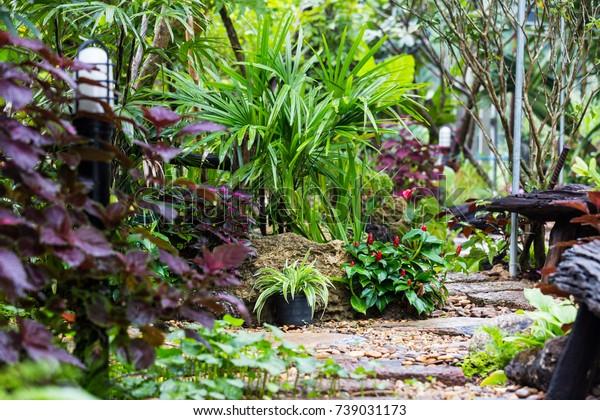 Tropical Rainforest Garden Stock Photo Edit Now 739031173