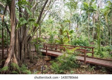 Tropical rainforest growth with footbridge and stream in Darwin, Australia