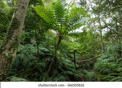 Tropical rainforest jungle with tree ferns, Okinawa, Japan