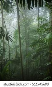 Tropical Rainforest Landscape,