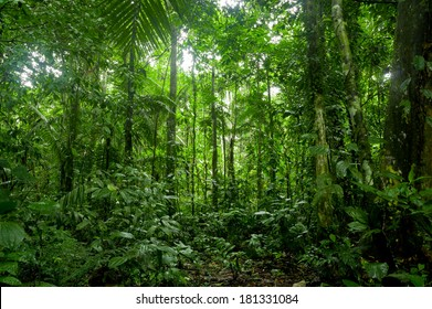 Tropical Rainforest Landscape, Amazon  Yasuni, Ecuador