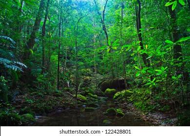 Tropical Rainforest Landscape, Thailand, Asia