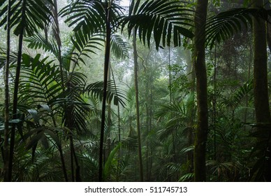 Tropical Rainforest Landscape,Tropical forest,Forest