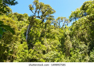 Tropical Rainforest in Madagascar, Africa