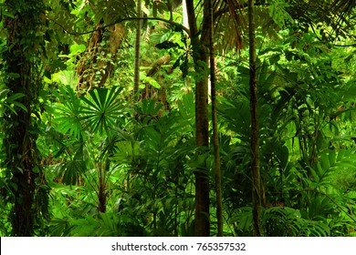 Tropical Rainforest, Queensland, Australia