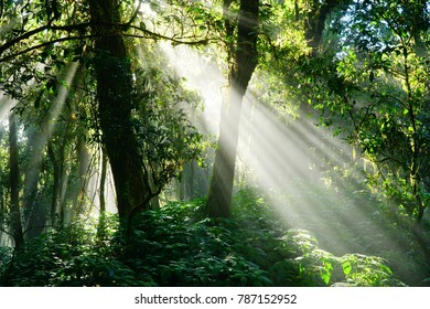 Tropical rainforest in tsunami with light shining through